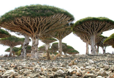 Socotra-Island-in-Yemen-3