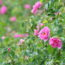 知られざる美しきイラン。バラの香りに誘われ対岸へ【前編】