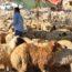 残酷な祭り?イード・アル・アドハ(犠牲祭)とは?ヨルダン現地レポ
